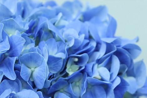 56月の結婚式に 幸せな花言葉を持つお花3選公式東京の結婚式